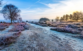 Picture frost, the sky, trees, landscape, nature, dawn, Road, morning, frost, Heather