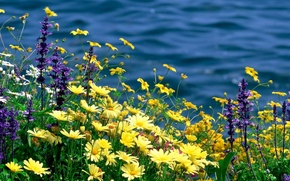 Picture summer, flowers, nature, river