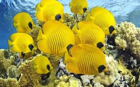 Picture water, Wallpaper, fish, underwater world