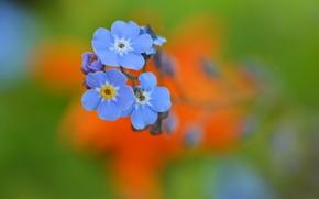 Picture flowers, nature, plant, petals