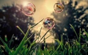 Picture grass, nature, bubbles, umbrella, bubbles, grass, nature, umbrella