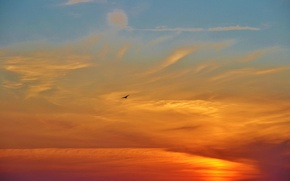 Picture the sky, clouds, sunset, bird