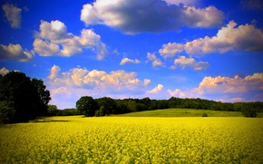 Picture field, summer, the sky, clouds, trees, flowers, rape