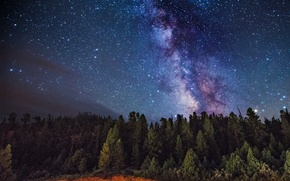 Picture space, stars, trees, The Milky Way, secrets
