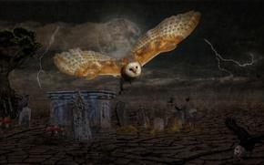Picture the storm, flight, birds, night, rendering, rain, tree, owl, the moon, zipper, mushrooms, art, tombstones, …