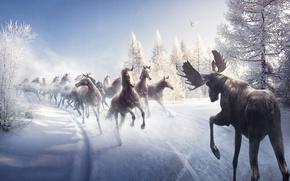 Picture winter, road, snow, bird, horse, tree, moose