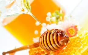 Picture flowers, cell, honey, Honey dipper