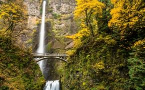 Picture autumn, forest, trees, bridge, river, waterfall, stream, USA, Oregon