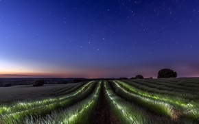 Picture field, the sky, night