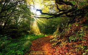 Picture autumn, forest, the sky, grass, leaves, the sun, clouds, rays, landscape, sunset, nature, the way, ...
