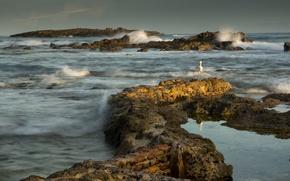 Picture sea, the sky, clouds, stones, rocks, bird