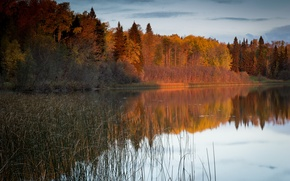 Picture autumn, forest, nature, river
