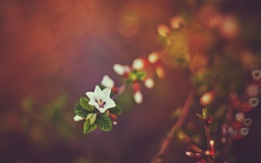 Picture sunset, nature, spring, bokeh, twigs
