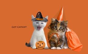 Picture animals, kitty, kittens, orange background