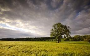 Picture field, summer, landscape, tree
