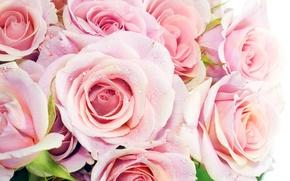 Wallpaper macro, roses, Bouquet, colors