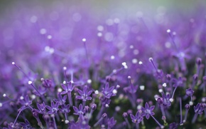 Picture flowers, bokeh, throatwort