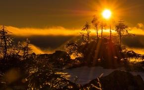 Picture winter, snow, trees, morning, haze, sunlight