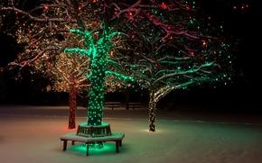 Picture winter, snow, night, nature, lights, lights, Park, tree, bench, nature, night, park, winter, snow, tree, ...