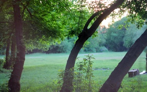 Picture greens, trees, landscape, sunset, tree, trees, landscape, nature, sunset