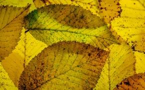 Picture leaves, macro, autumn