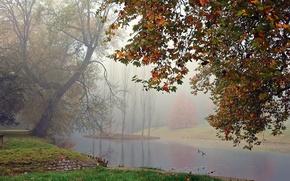 Picture fog, lake, duck, Autumn, falling leaves, trees, autumn, leaves, fog, fall