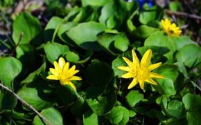 Picture flowers, yellow, green