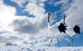 Wallpaper pair, birds, the sky, Japanese crane, clouds