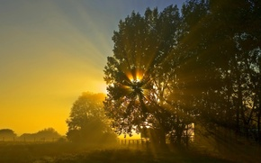 Wallpaper tree, the sun, sunrise, night