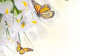 Picture butterfly, flowers, leaves, white irises