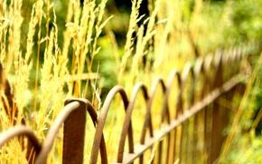 Wallpaper greens, macro, background, widescreen, Wallpaper, the fence, plant, blur, fence, the fence, wallpaper, widescreen, background, ...