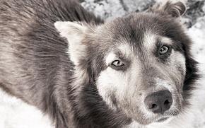 Picture sadness, eyes, dog