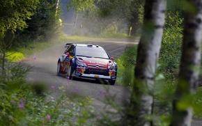 Picture Forest, Machine, Citroen, Citroen, WRC, Rally, Rally, The front, Dani Sordo