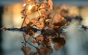 Picture leaves, water, the sun, veins
