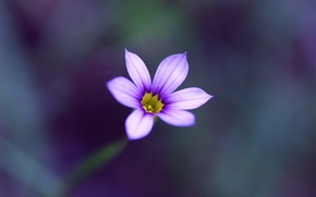 Wallpaper flower, macro, blur, Lilac