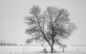 Picture winter, snow, tree, fog, fence, cold