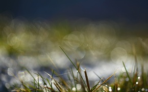 Picture greens, water, drops, macro, Rosa, glare, Grass, morning, bokeh