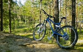 Picture forest, trees, bike, green, green, frame, forest, brown, widescreen Wallpaper, brown, mountain, mtb, Wallpaper for …