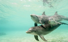 Picture water, pack, dolphins, underwater world