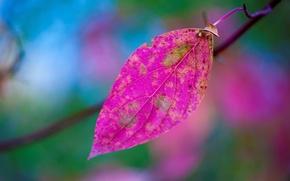 Wallpaper sheet, paint, branch, autumn, nature