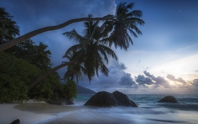 Picture tropics, stones, palm trees, the ocean, coast, The Indian ocean, Seychelles, Indian Ocean, Seychelles