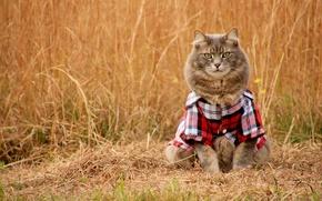 Picture field, cat, cat, look, shirt