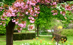 Picture flowers, nature, Park, spring, pink, nature, park, Photo, pink flowers