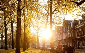 Picture autumn, the sun, the city, street, Sunny Autumn Afternoon In Utrecht