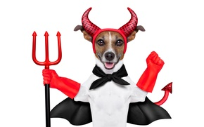 Picture Trident, Jack Russell Terrier, outfit, red, Cape, white background, the devil, tail, humor, horns, gloves