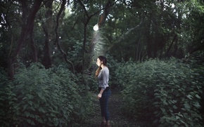 Picture forest, girl, lamp, Overwhelming darkness