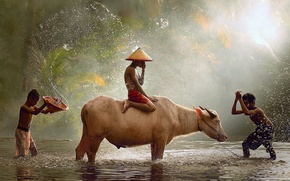 Picture drops, light, children, the game, Indonesia, Java, the splashes of water, bull