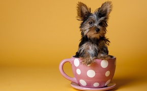 Picture dog, background, Cup