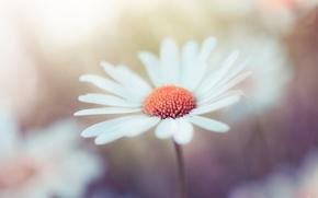 Picture flower, macro, by Robin de Blanche, Tones