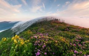 Wallpaper grass, flowers, mountains, fog, morning